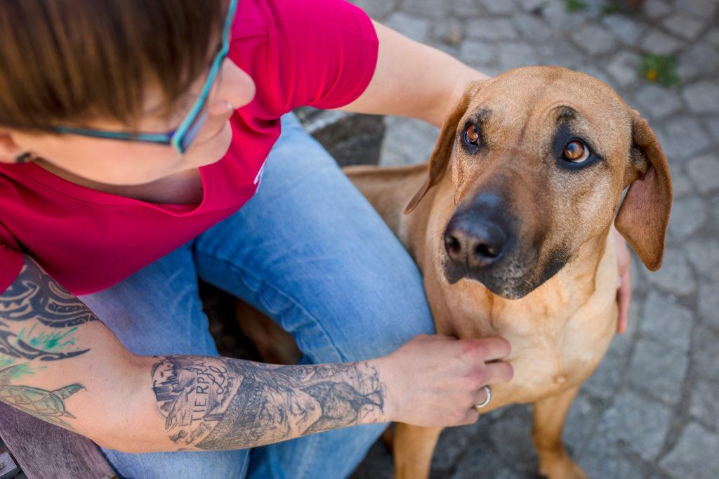 Erfolgsstarter Hundewirbelsäule Modul