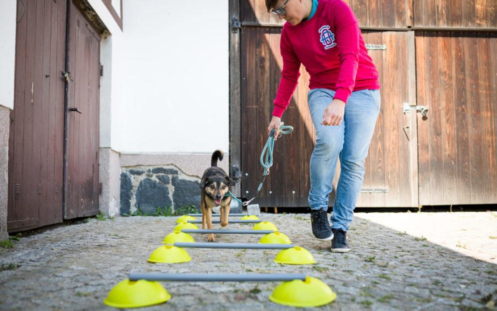 Erfolgsstarter Hundewirbelsäule Parcour