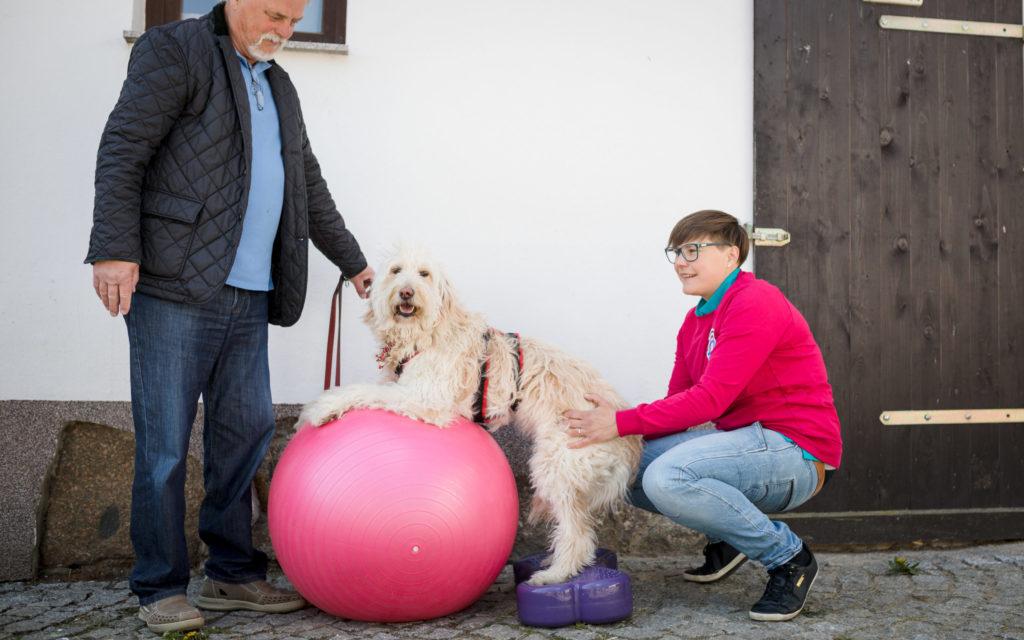 Erfolgsstarter Hundewirbelsäule Modul Muskulaturaufbau Hund