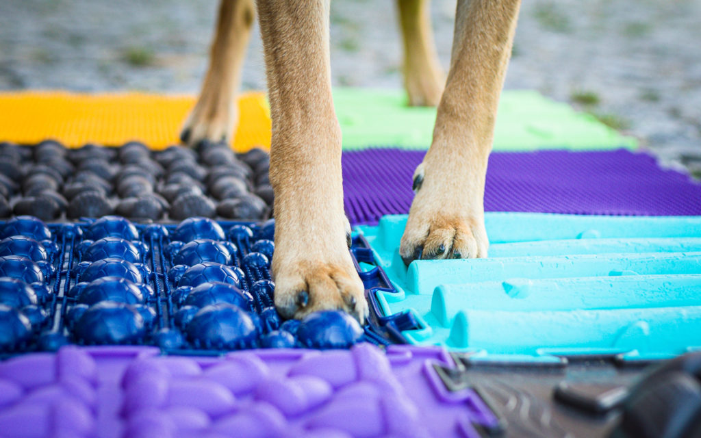 Propriozeption Hund