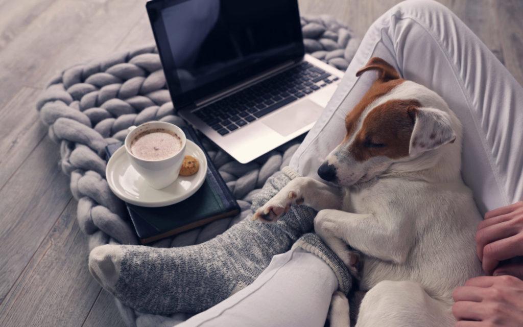 Onlinekurs Hund