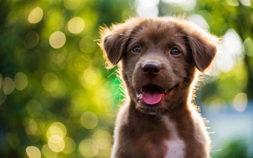 Mein neuer Freund, der Hund