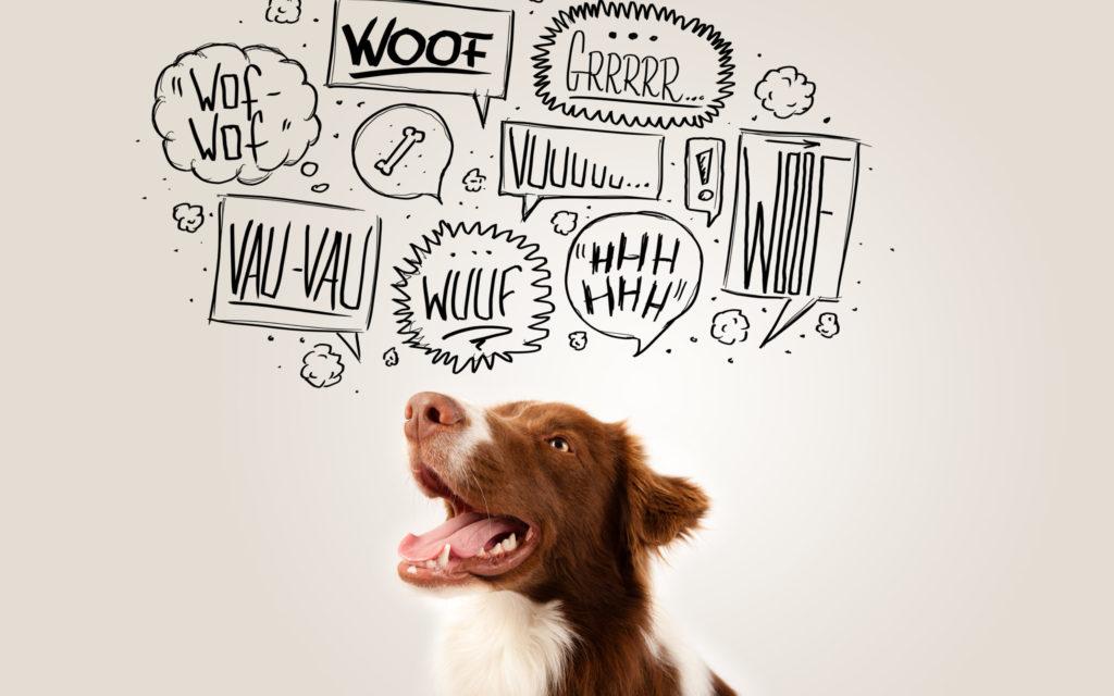 .Die Körpersprache deine Hunde - so deutest du Signale richtig.