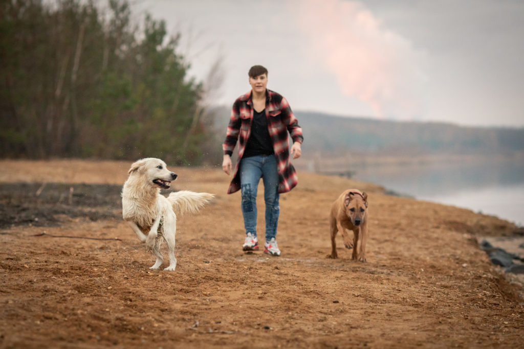 Hundeglück rennende Hunde am See