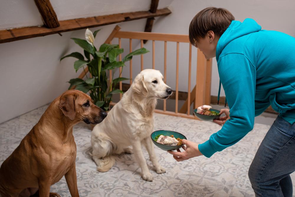 Hundeglück richtige Fütterung