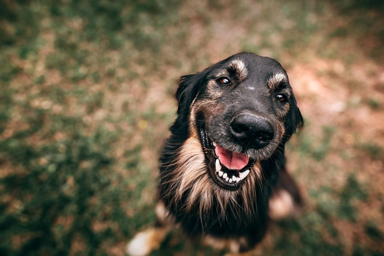 Hundherum gesund Happy Dog